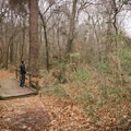 A hiker stops to look downstream on the Chicot State Park Hiking Trail.- Incredible Louisiana Hiking + Biking Trails For Your Bucket List