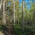 Beautiful aspen and fir forest early in the Mount Elbert hike.- Highway 82: A Sawatch Road Trip