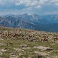 A herd of elk seen on the descent from Longs Peak.- Longs Peak: Keyhole Route