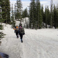 Mount Shasta Avalanche Gulch.- How and Where to Ski Year Round This Year