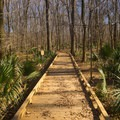 Hollow Cypress Boardwalk that leads to the Observation Tower at Tensas River National Wildlife Refuge.- Adventurer's Guide to Northern Louisiana