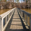 This boardwalk in Lake D'Arbonne State Park is a lovely place to catch a sunset or even perhaps a fish or two. - Adventurer's Guide to Northern Louisiana