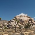 View from the begining of Cap Rock Nature Trail.- Guide to Hiking in Joshua Tree National Park