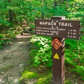 Keep left at the kiosk to ascend the Wapack Trail.- A Family-friendly Guide to Peterborough + Keene, New Hampshire