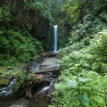 Larch Mountain Trail: Weisendanger Falls.- Must-See Views in Our National Scenic Areas