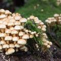 Week 36: Fungi- 52 Week Adventure Challenge