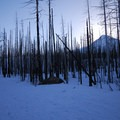 View of Mount Hood (11,250 ft) through the burnt forest on the trail to Tilly Jane A-Frame.- Snowshoeing on Mount Hood