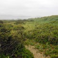 Hiking trail on Bayocean Peninsula.- The Tillamook Bay Heritage Route
