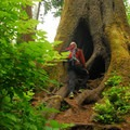 Base of the Cathedral Tree.- Exploring Oregon Watersheds: Adventure Brews