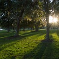 Evening sun in the trees at Buck Hall Recreation Area.- Adventure Guide to the Charleston Area