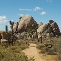 Views from the Cap Rock Nature Trail.- 11 Best Day Hikes in Joshua Tree National Park