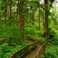 Old-growth forest of Sitka spruce and western hemlock on the Cathedral Tree Trail.- Exploring Oregon Watersheds: Adventure Brews