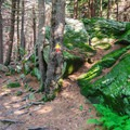 Bright green moss along the trail of Pack Monadnock Loop.- 6 Must-Do Autumn Adventures in New Hampshire