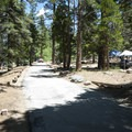 South Fork Campground.- Barton Flats Recreation Area
