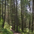 Wandering the trails in Cougar Bay Nature Preserve.- Best Hikes Near Spokane, Washington