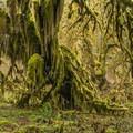 Week 35: Rain Forest- 52 Week Adventure Challenge