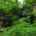 Lush flora en route to the caves in Maquoketa Caves State Park.- Plumb the Depths With These Can't-Miss Caves