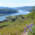 Looking west at the Columbia River from the Lyle Cherry Orchard Trail.- Columbia River Gorge National Scenic Area