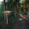 Heartwood Trail at Dairy Creek Camp East, L.L. Stub Stewart State Park.- L.L. Stub Stewart State Park