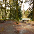 Typical campsite in Queets Campground.- A Guide To Camping in Washington