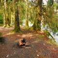 Typical campsite in Queets Campground.- Best Year-round Campgrounds in Washington