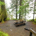 A typical campsite in Willaby Campground.- A Complete Guide to Camping in Olympic National Park