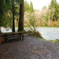 Typical campsite in Queets Campground.- A Complete Guide to Camping in Olympic National Park