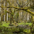 Sitka Nature Trail.- Into the Woods: Unforgettable Arboreal Adventures