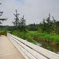 Boardwalk along the Netul River Trail.- 10 Best Locations for Spotting Wildlife on the Oregon Coast