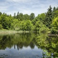Marlake in West Hylebos Wetlands Park.- Seattle's Best Day Hikes