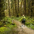 Sams River Loop Trail, Olympic National Park.- 100 Incredible Adventures in Our National Parks