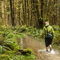 Hiker making his way through the Sams River Loop Trail alongside the Queets River.- American Rainforests You Need to See