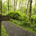 "Radar Park's short trail to ""Million Dollar View.""- Seattle's Best Day Hikes"