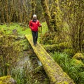 Sams River Loop Trail.- 20 Incredible Adventures on the Olympic Peninsula