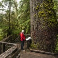 Quinault Rainforest Nature Loop Trail in Olympic National Park.- Favorite Family-friendly Hikes in U.S. National Parks