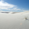 Expansive dunes in White Sands National Monument.- Ecosystems Divided: The Border Wall's Devastating Environmental Impacts