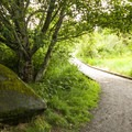Lewis Creek Park trail system.- Seattle's Best Day Hikes