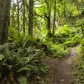 Flaming Geyser State Park trail to the Bubbling Geyser.- State Parks You Can't Miss