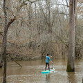 Paddling among the ancients on Chemin-a-Haut Creek.- Paddler's Guide to Louisiana Swamps, Lakes + Bayous