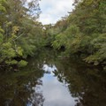 Wambaw Creek in the South Sawtee River.- Adventure Guide to the Charleston Area