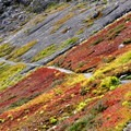 Fall colors on Winchester Mountain.- A Guide to Adventuring on Mount Baker