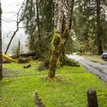 Hoh Campground.- A Complete Guide to Camping in Olympic National Park