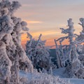 A calm sunset hitting iced trees.- The Best Snowshoeing Near Bend, Oregon