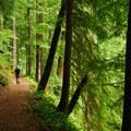 Week 31: National Forest- 52 Week Adventure Challenge
