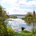 Yesler Swamp Trail.- Western Birding Hotspots