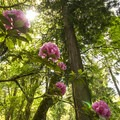 Rhododendron Garden in Point Defiance Park.- Seattle's Best Day Hikes