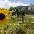 View of the Flatirons from the Chautauqua Trailhead in Boulder, Colorado.- Summer Road Trip Destinations in Idaho, Colorado, and Utah
