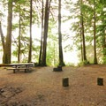 Typical campsite in Mora Campground.- A Complete Guide to Camping in Olympic National Park