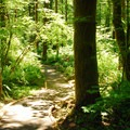 Trail within the walk-in campsite area at Jones Creek.- Your Go-To Guide for Camping Near Portland