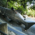 Iconic salmon slide and playground at Carkeek Park.- Seattle's 16 Best Kid-Friendly Adventures